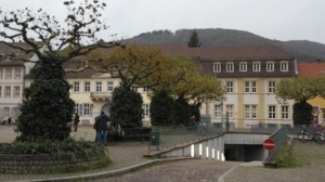 Heidelberg has many lovely open spaces- and funky trees